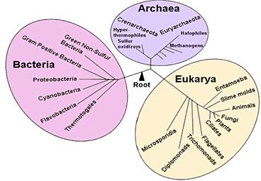 junibioproject | Domain Archaea