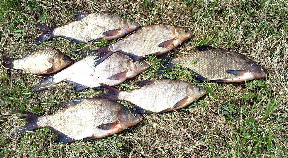великий устюг охота и рыбалка