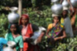 84 - Tea Plantation Workers, Sri Mangal,