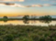Flying M Ranch-Landscape-web-190.jpg