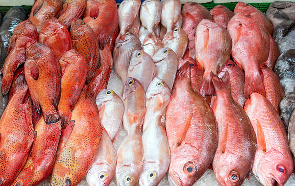 red-snapper-and-red-mullet-for-sale-G7Y6