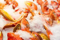 fresh-fish-in-market-M9BHTGW.jpg