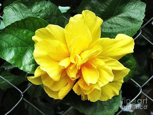 smallsite  flowers hd, Beautiful flower