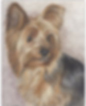 Drawing of Yorkie