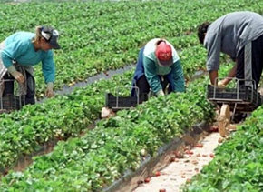Angajari sezoniere agricultura