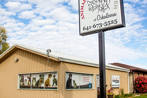 Dog Grooming In Knoxville Iowa