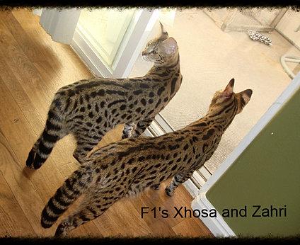 feral cat behavior blog