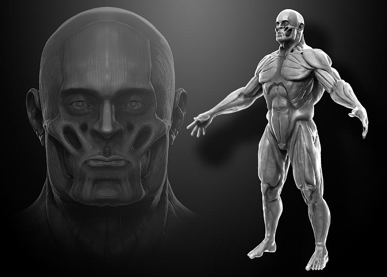 tylerbengtson | male muscle study sculpt, Muscles