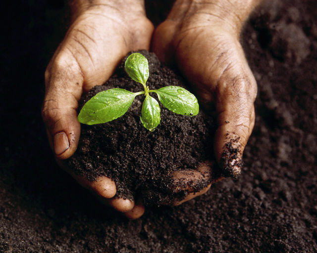 plant-nurtured-by-hands
