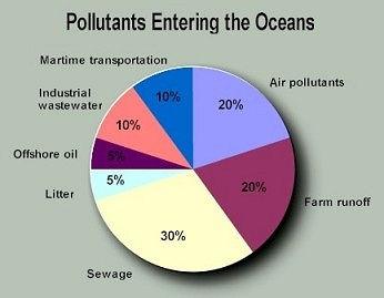 Stop Pollution of Marine Habitats | Wix.com