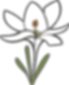 crocus blanc handicap domont