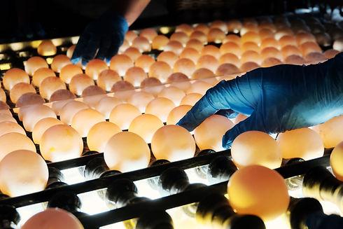 sanguanfarm egg image 1.jpg