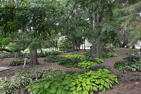 Mccrory Gardens Brookings Sd Hosta Walk