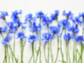 Cornflowers.png