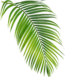 leaf small 2.png