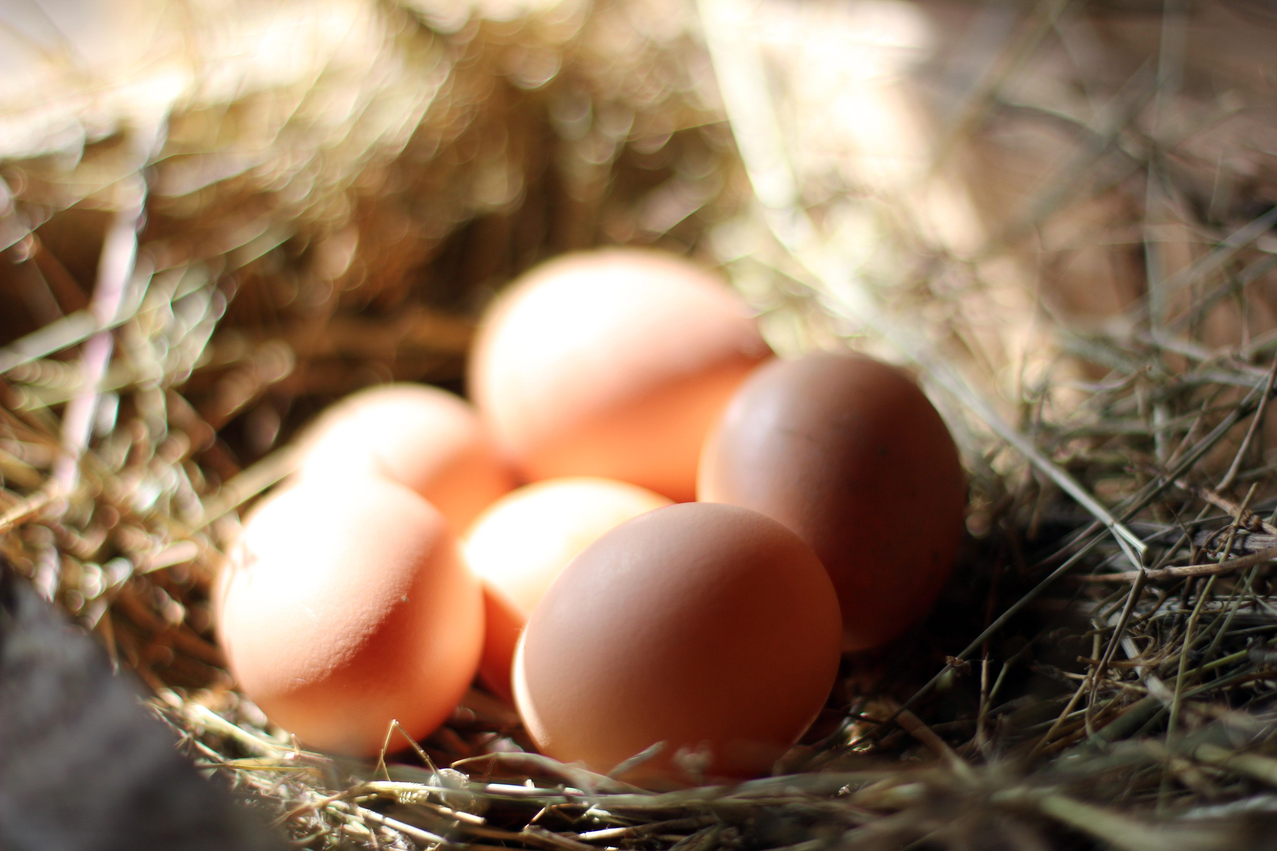 Yumurta Kokusu Nasıl Çıkar