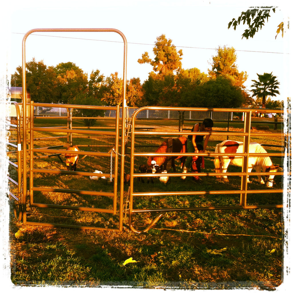 Ford Farms Mobile Petting Zoo