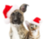 getty-christmas-dog-and-cat.png