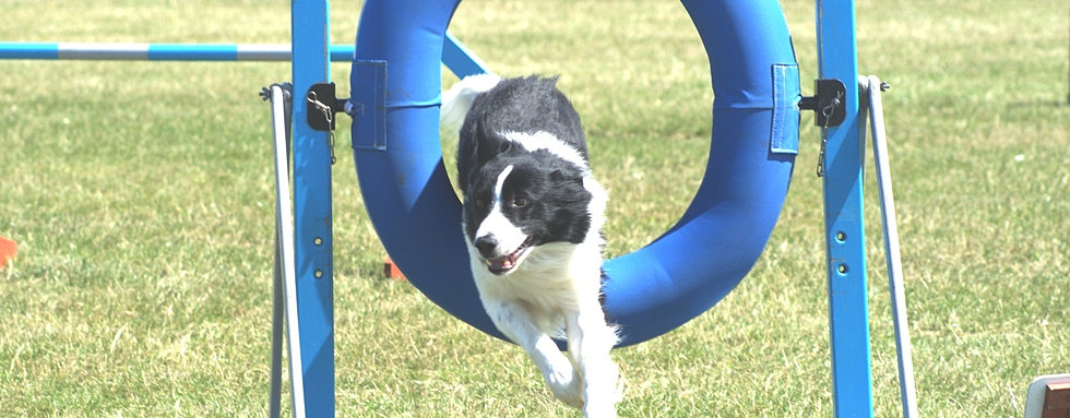 Image Result For Dog Training Classes West Sus