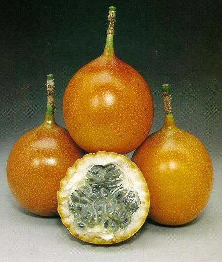 ECFruits, Exotic Colombian Fruits, Frutas Exoticas de colombia  Wix.com