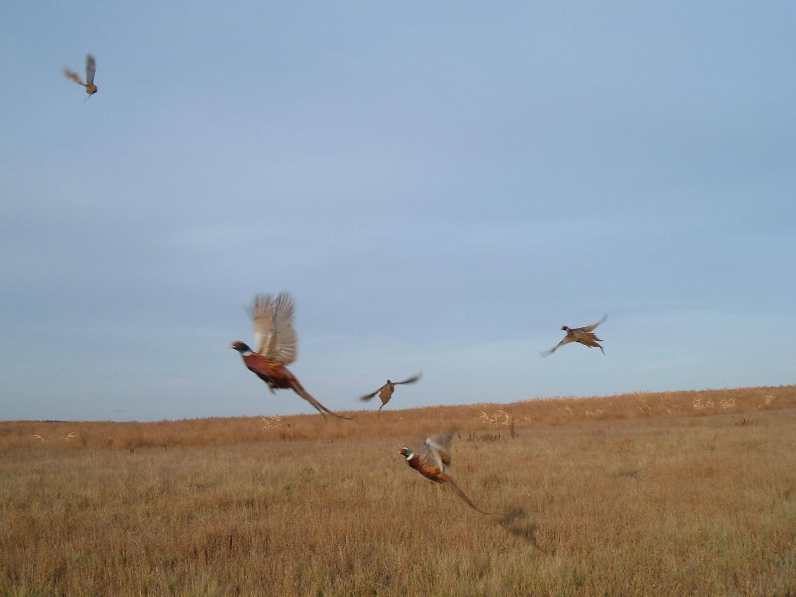 Pheasant hunting club Los Angeles CA