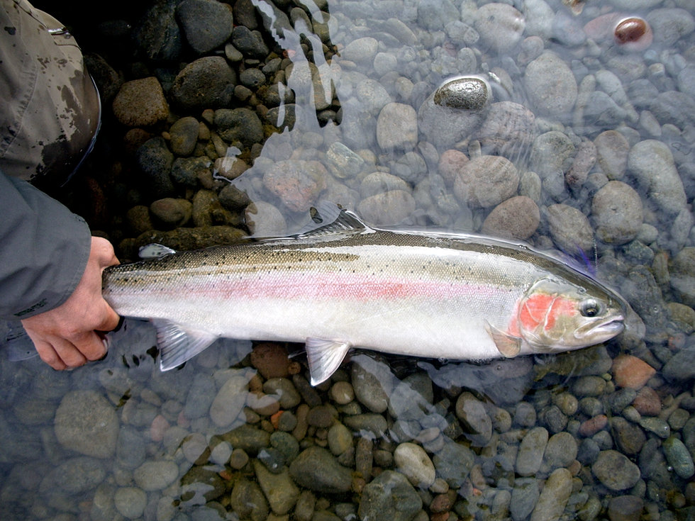 Puget sound rivers for Salmon fishing puget sound