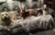 JoBoyds Dogs.jpg