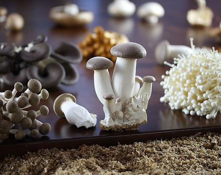 mushroom value chain Posts about mushroom training in zimbabwe written by anythingmushroom anythingmushroom  the mushroom value chain, recognising and blocking the value.