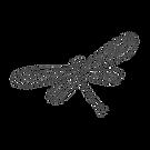 noun_Dragonfly_921046_414141.png
