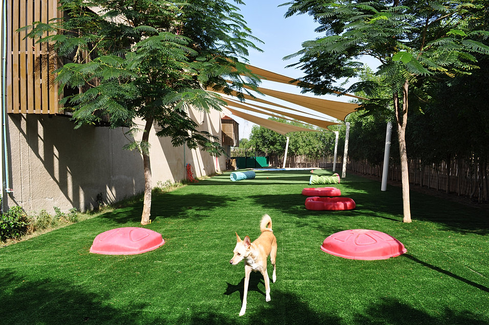 Urban tails pet resort boarding daycare training for Garden pool for dogs