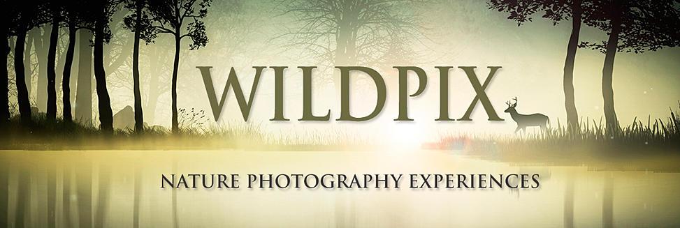 nature photography travel, wildpix travelwildpix, nature photography travel, wildpix travel, natuurfotoreizen, natuurfotografie