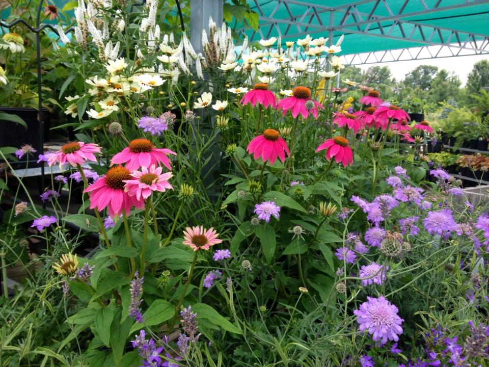 At Whispering Hills, We Have A Wide Variety Of Plants That Will Certainly  Work For Your Butterfly Garden! Stop In And Meet With One Of Our Landscape  ...