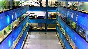 Aqua world pet store pittsburgh pa aquarium for Fish store pittsburgh