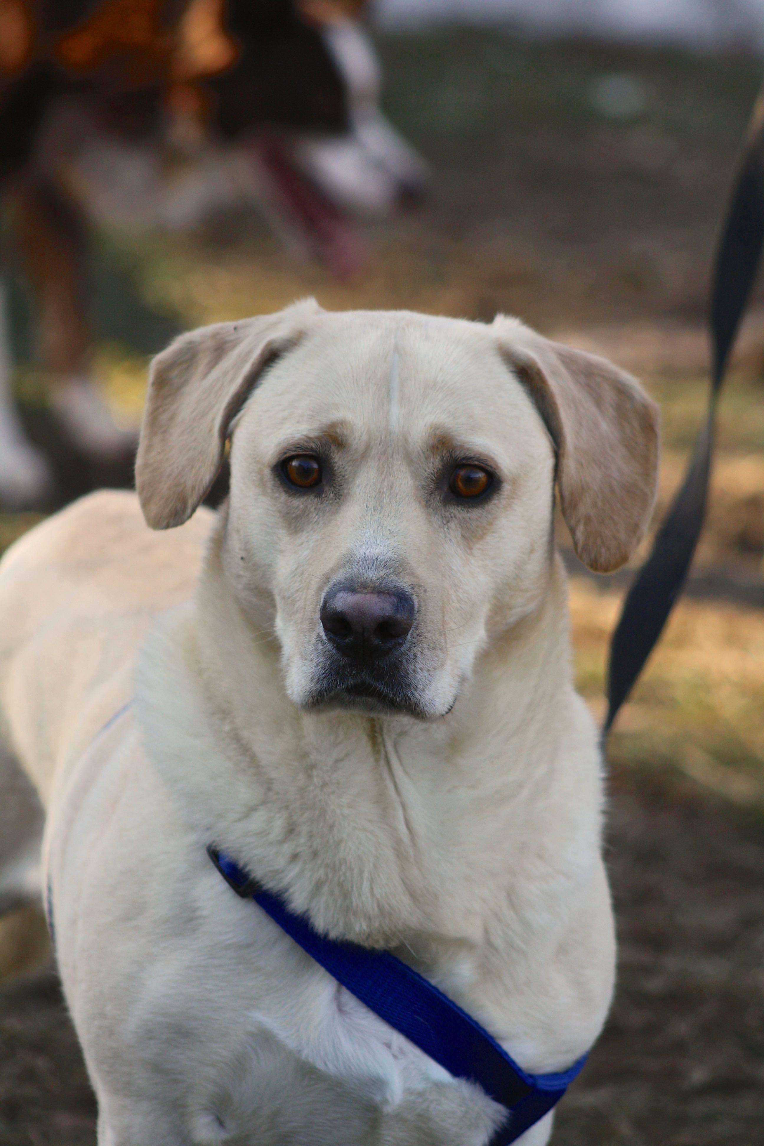 Local Dog Rescue Centres