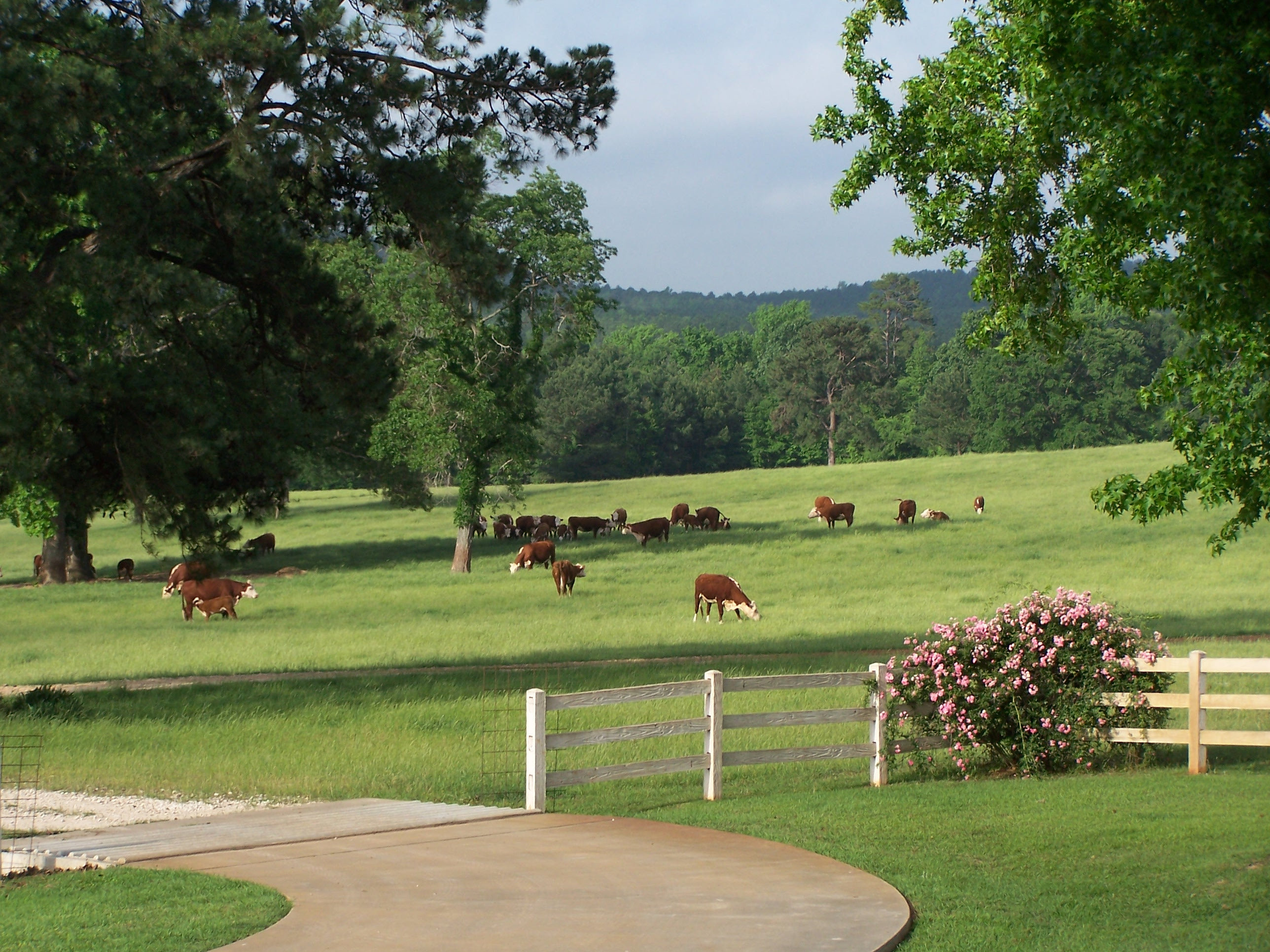 east texas land for sale ranch for sale east texas