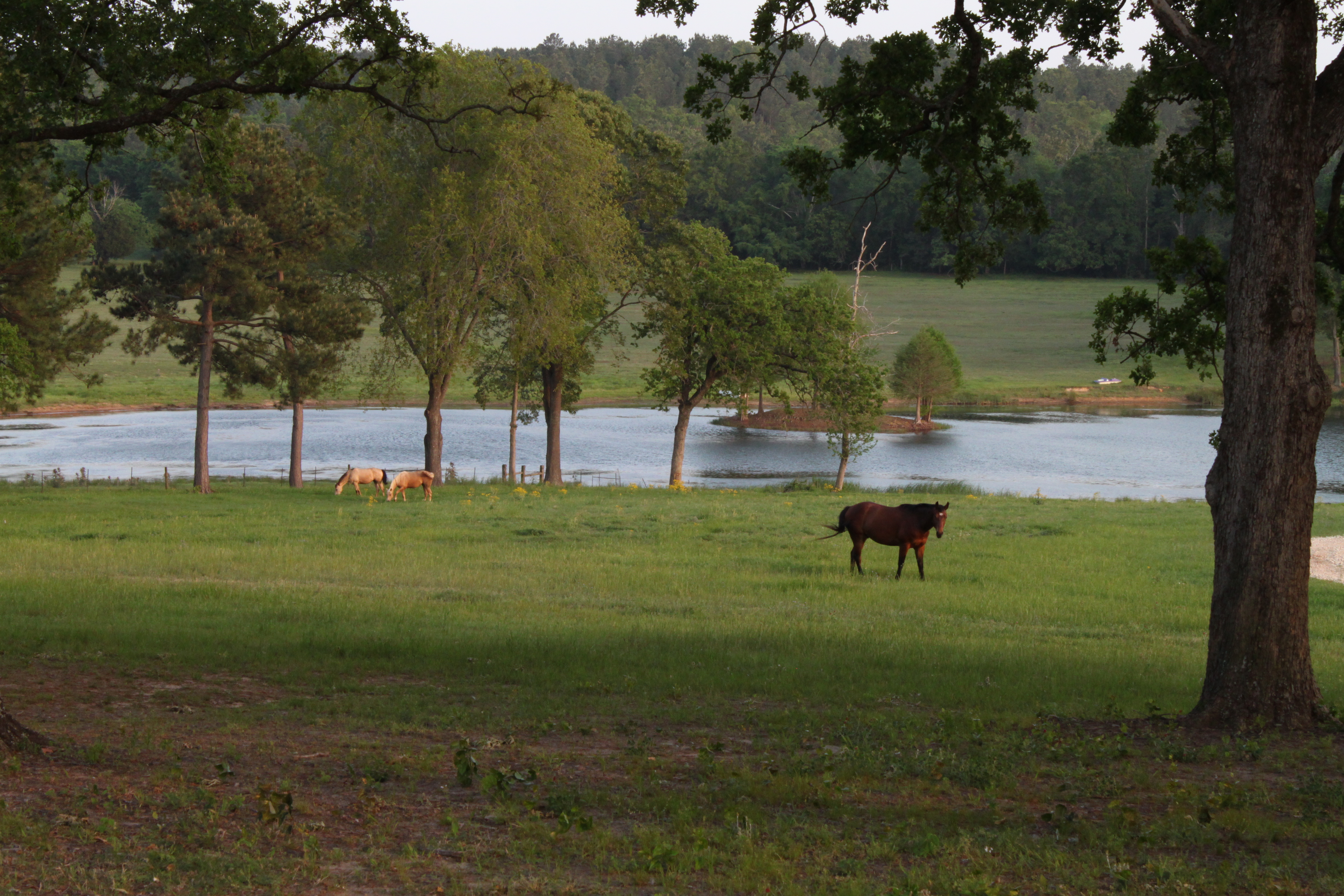 east texas land for sale ranch for sale east texas ranch acreage for sale east tx