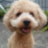 パピーパーティ 子犬画像