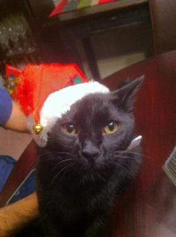 Ernie_Christmas.jpg