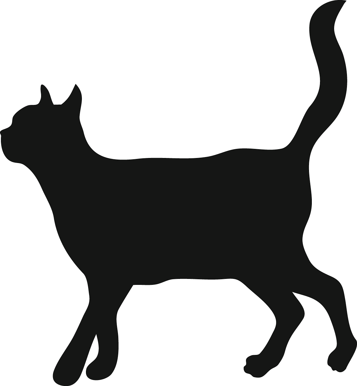 Black Cat Openinf