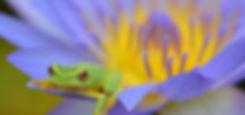 frog on purples flower.jpg