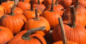 Pumpkins for 3rd Sunday Oct 21.jpg