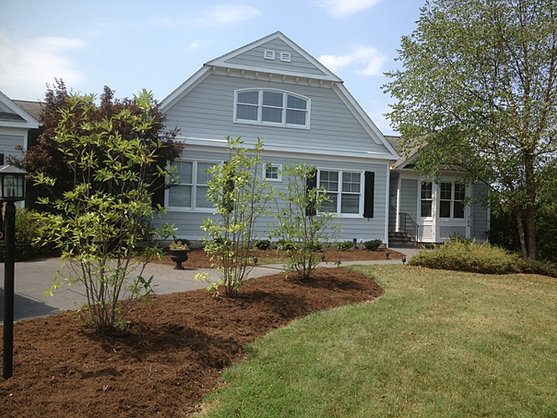 New trees add curb appeal