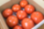 tomato1.25kg.png