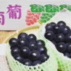 あぐりのたよりにて、人気のブドウ「ナガノパープル」の取り扱いが始まりました。収穫