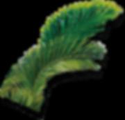 leaf05.png