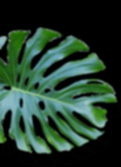 leaf09.png