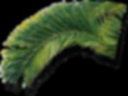 leaf06.png