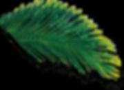 leaf07.png