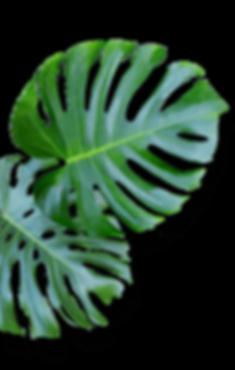 leaf10.png