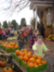 School Field Trips, Corn Maze, Pumpkins